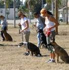 Do You Want Your Dog To Have The Best Training?