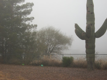 Saguaro in the fog