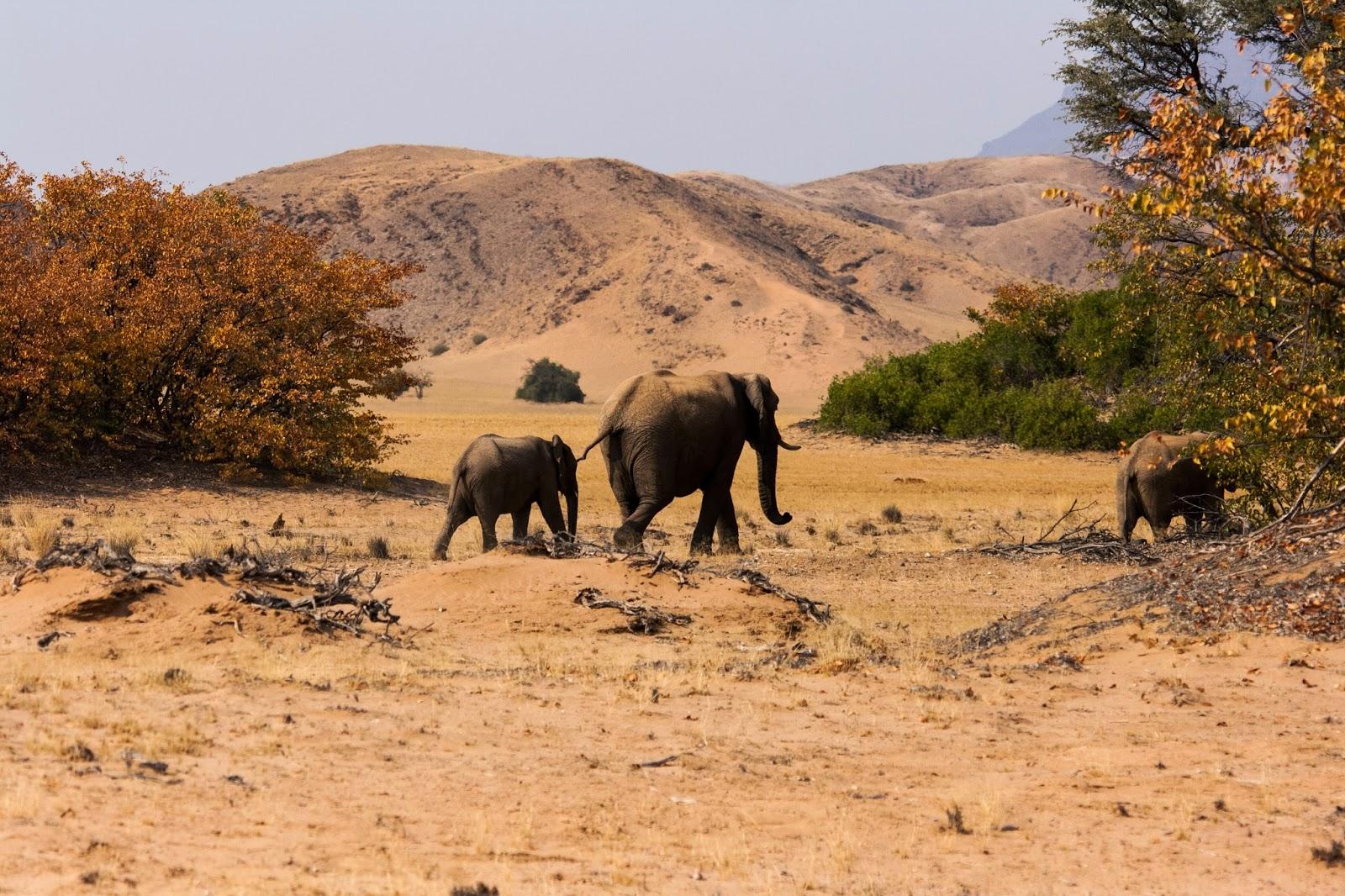 elephants damaraland namibia