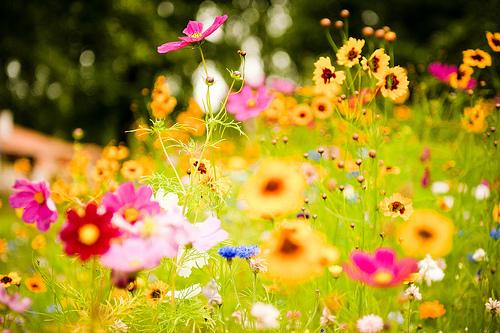 Çiçek Yetiştirme Oyunu