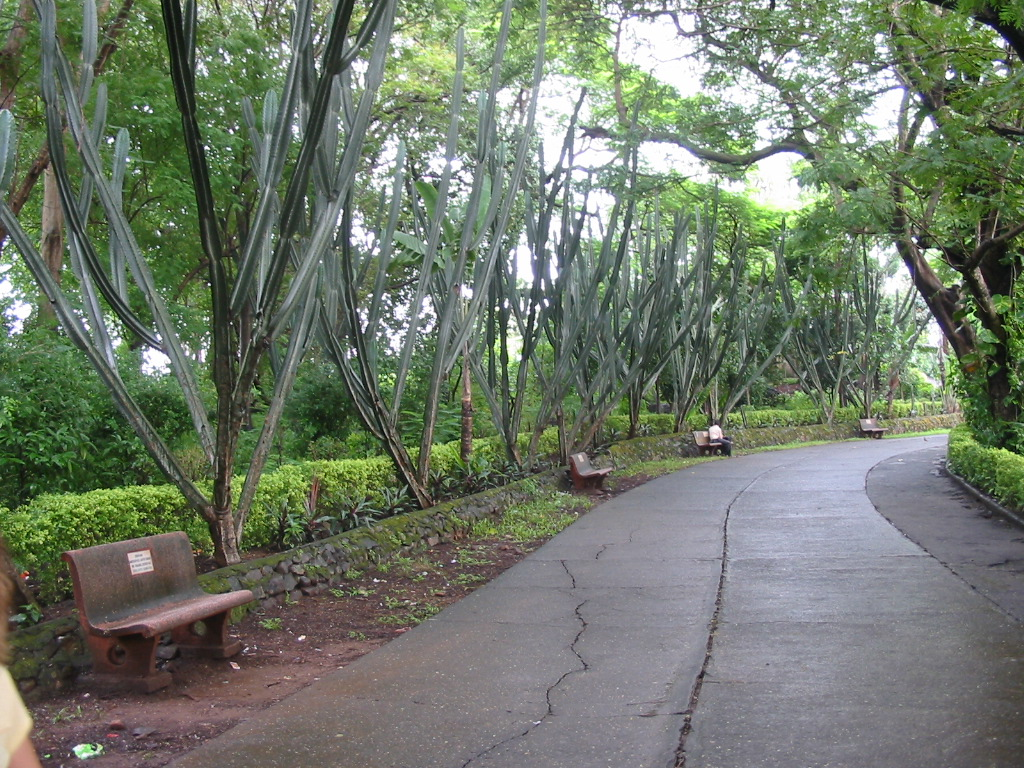 Aarey colony
