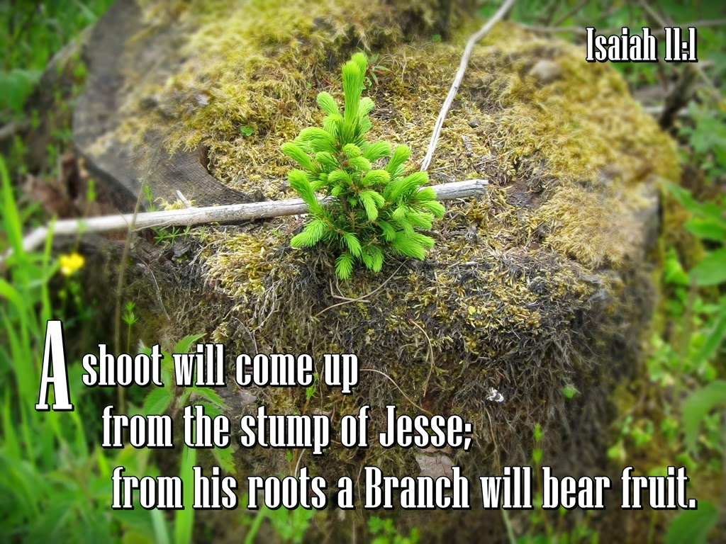 His Word in Pictures: Isaiah 11:1