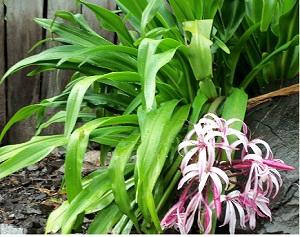 Plantas ornamentales plantas ornamentales en la provincia for Especies de plantas ornamentales
