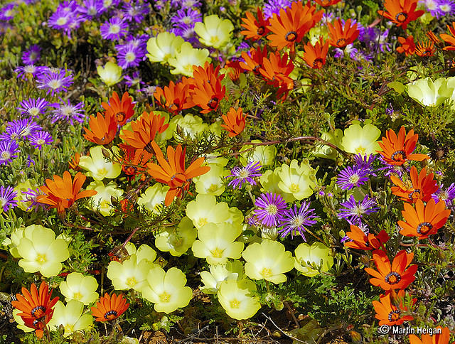 Namaqualand 6 day flower journey - Journeys In Africa