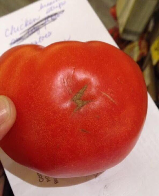 Potter Tomate