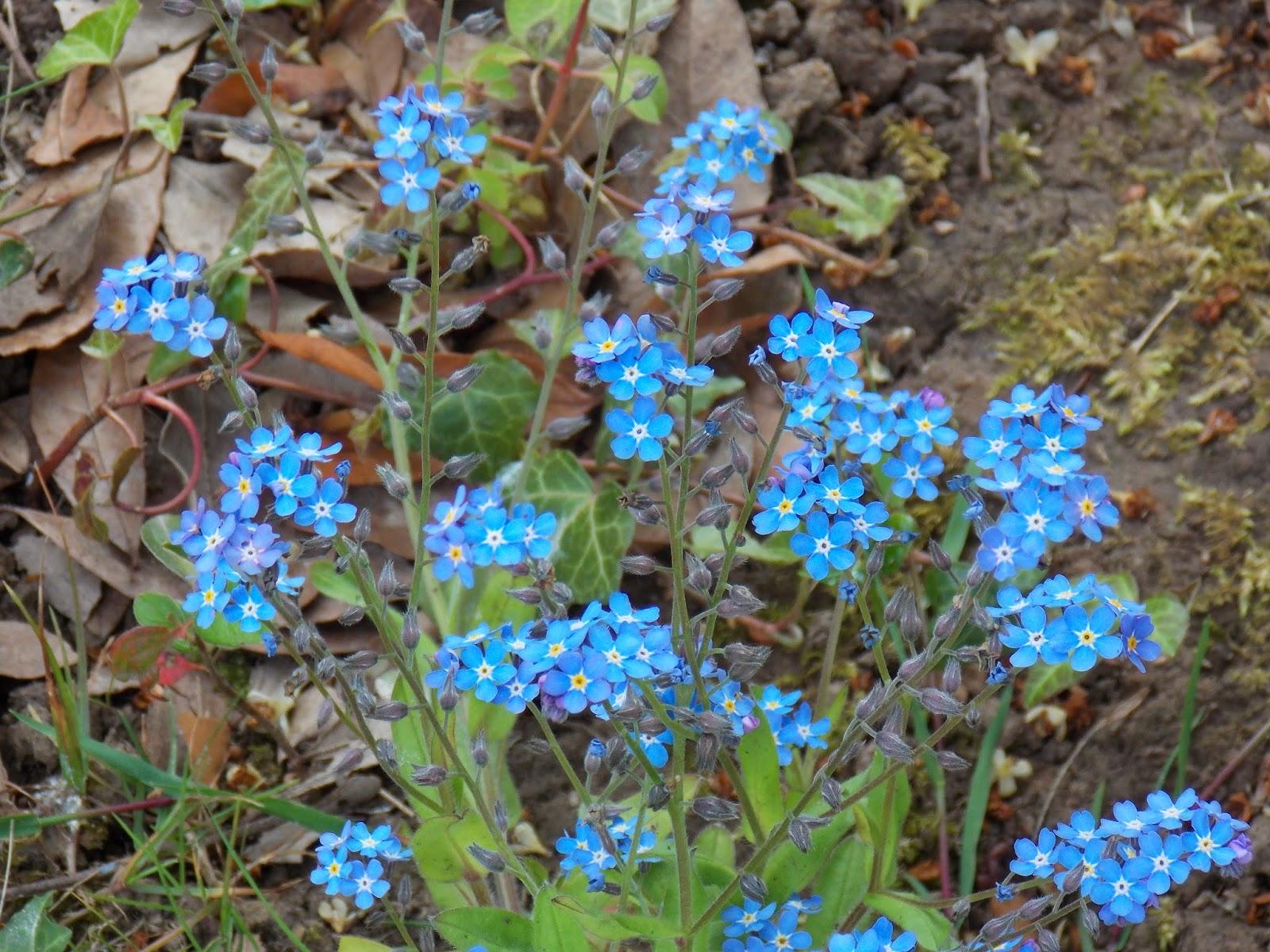 Ecolo bio nature permaculture urbaine et jardinage bio for Fleurs de nos jardins