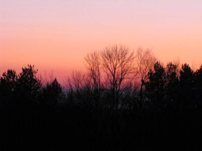 trees silhouetted in orange sunset