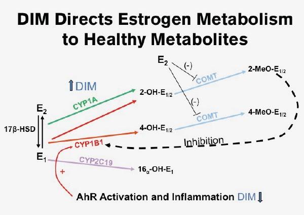 Does dim lower estrogen