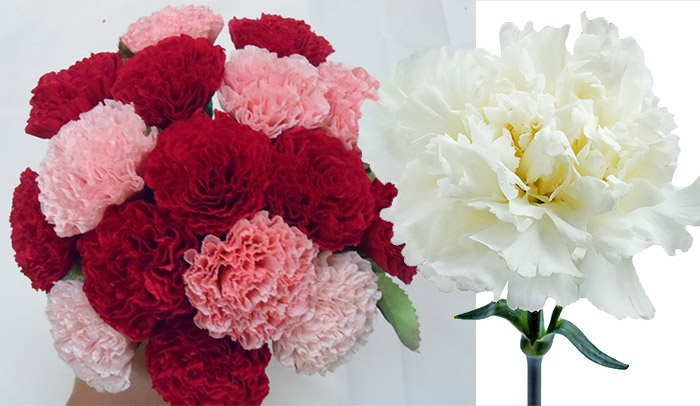Beautiful wedding flowers carnation wedding flowers inspiration light red symbolizes admiration while dark red represents deep love and affection purple carnations imply capriciousness and pink carnations symbol mightylinksfo