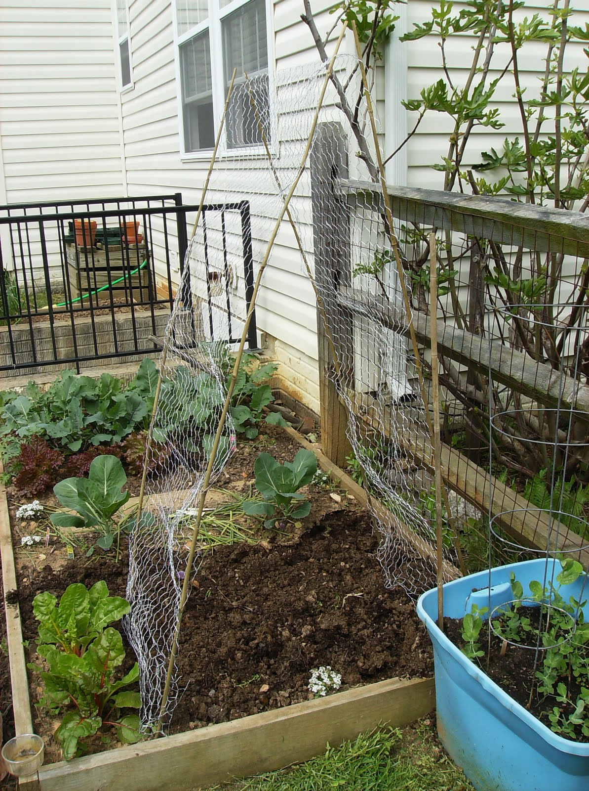 building a low cost vegetable garden trellis in pictures