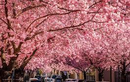 Primavera sontuosa