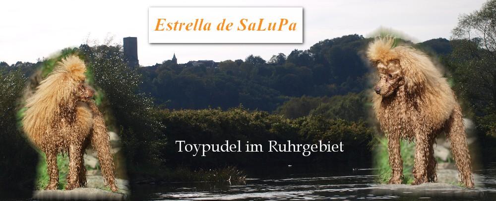 Toypudel in Bochum