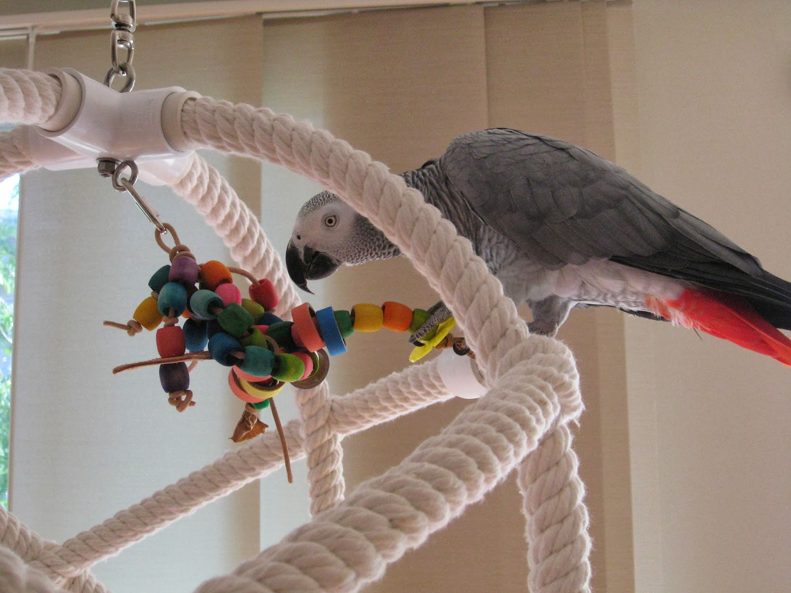 Make Your Own Bird Toys : Make your own parrot toys tv nude scenes
