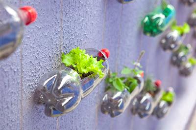 Vertical Garden Dari Botol Bekas