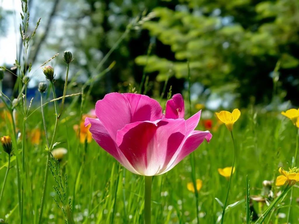 http://1.bp.blogspot.com/-tsC5ur6hDWI/T2XszbHgHkI/AAAAAAAAKH8/1RpdiV2m2N4/s1600/Cvijece-na-livadi-proljece-download-besplatne-pozadine-za-desktop-1024-x-768-slike-biljke-proljece-godisnje-doba.jpg