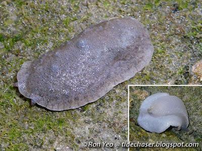 Onch Slug
