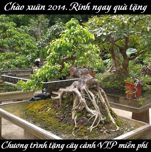 Cay canh dep qua tang 2014