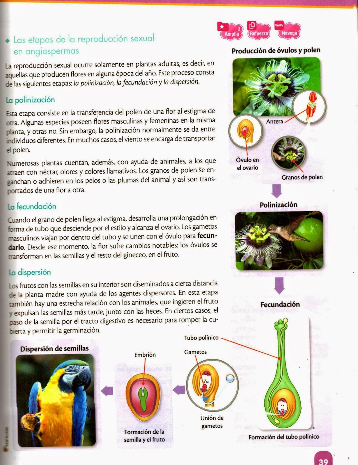Proceso de reproduccion sexual de las plantas con flores