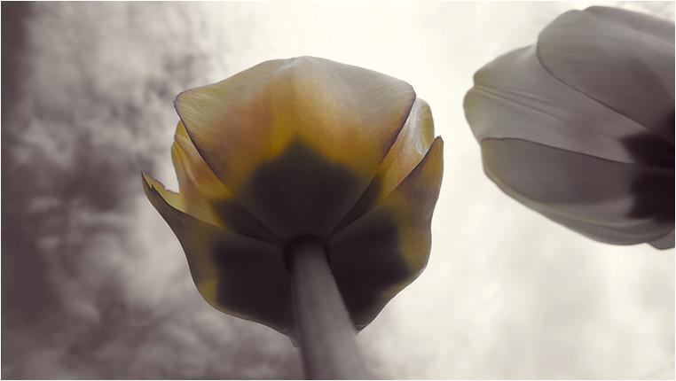 emphoka, photo of the day, Tim Folkins, Leica D-LUX 6