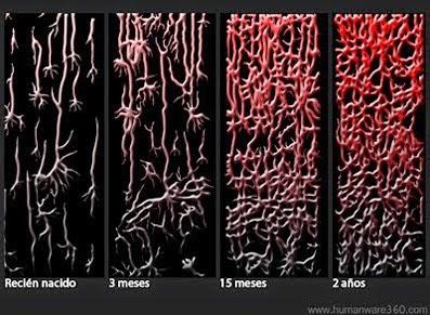 Neuronas, motivación, lactancia, contacto
