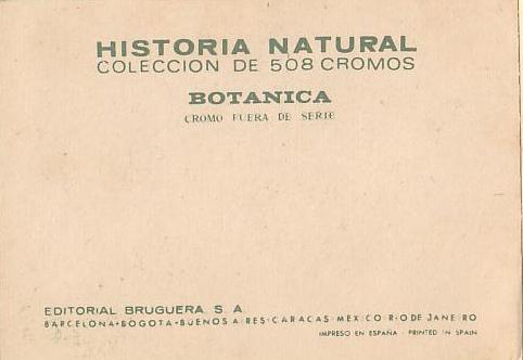 Memoria de papel bruguera historia natural cromos for Fuera de serie historia