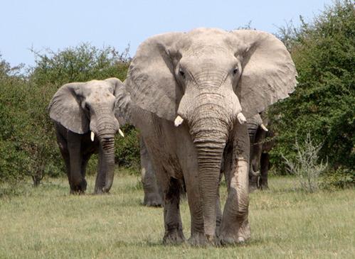 animais ameaçados de extinção i você realmente sabia