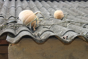 Pumpkins on the roof of a H'mong house in Simacai