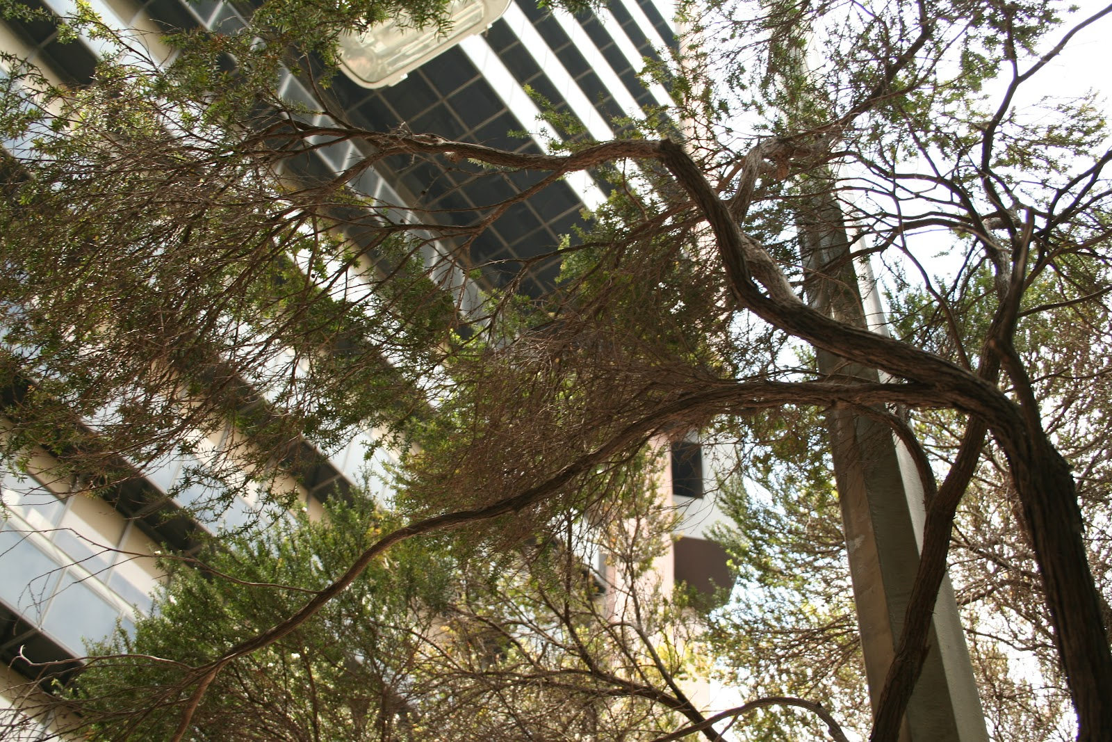 Samir\'s and Donghoon\'s Virtual Garden