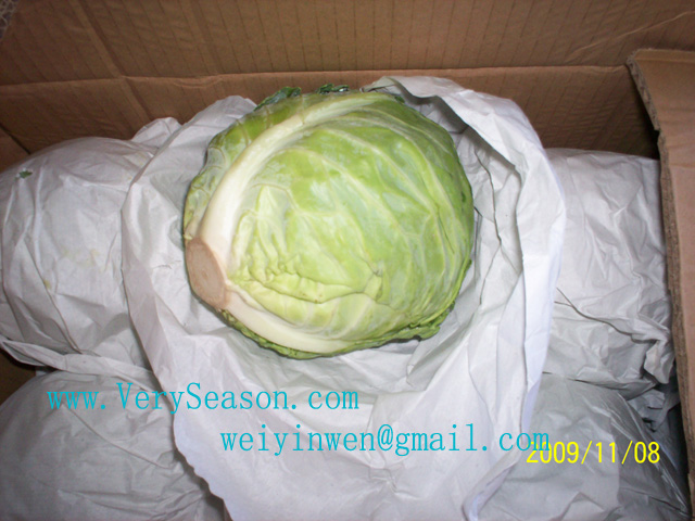 fujian chinese cabbage