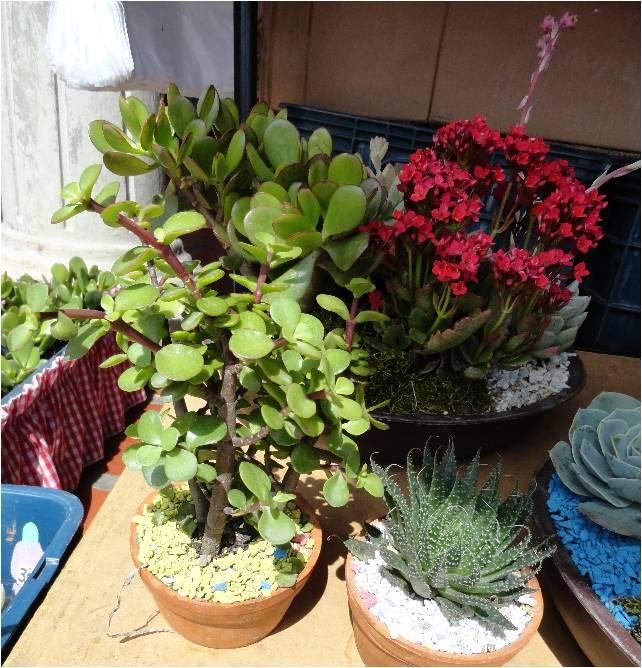 vida a lo verde living in green plantas crasas en