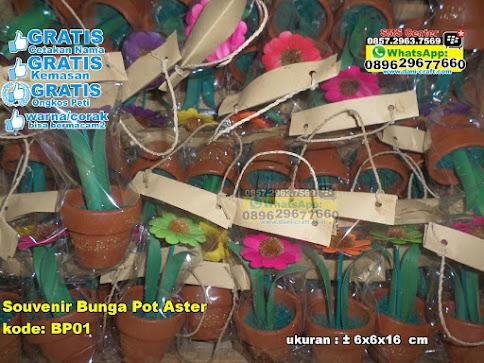 Souvenir Bunga Pot Aster grosir