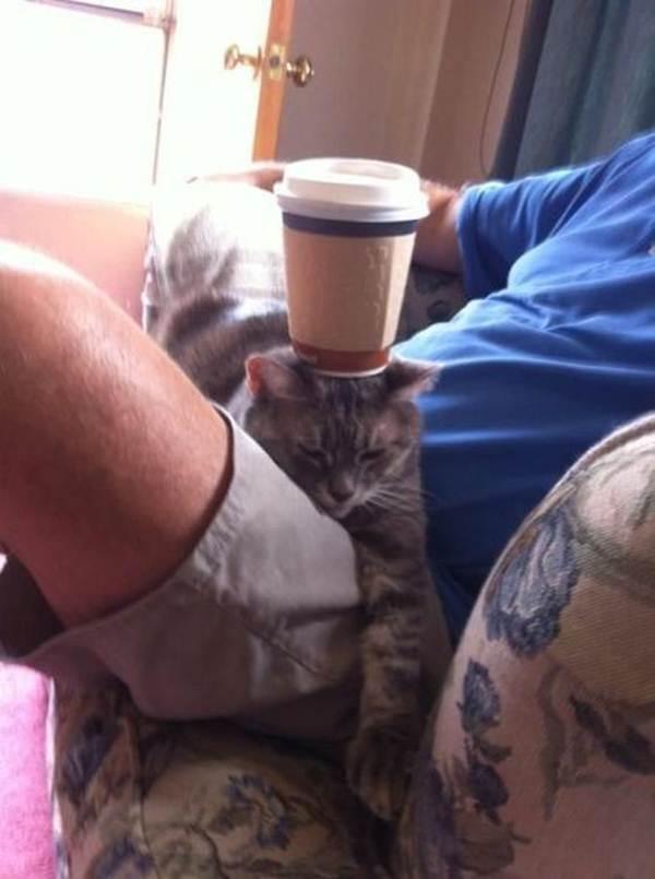 Funny cats - part 65 (35 pics + 10 gifs), funny cat pictures, cat pics, funny cats