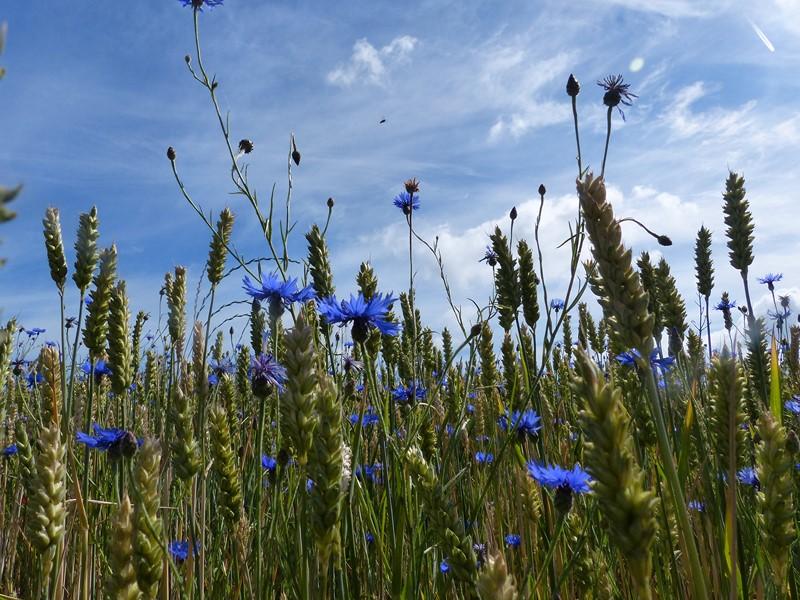 Du ciel bleu
