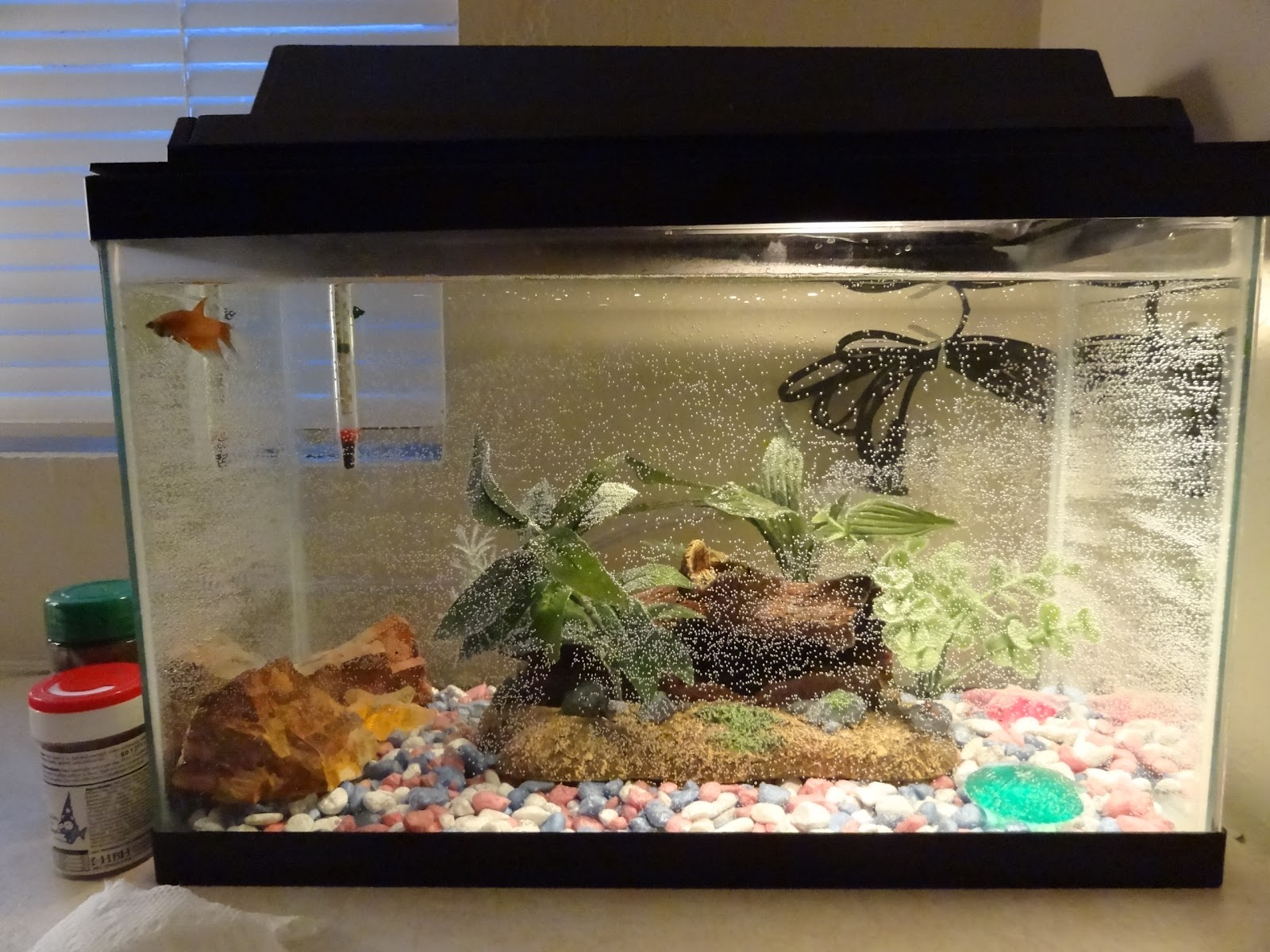 5 gallon fish tank how big how big is a 5 gallon fish for Large fish tank