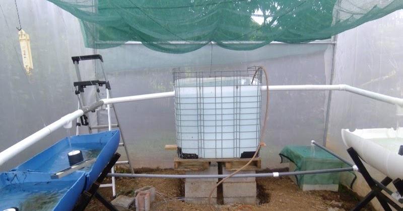 Acuapon a jardines y permacultura en costa rica sistema for Tanques para peces
