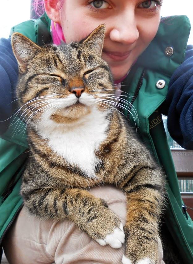 7 Sachen Sonntags - Und täglich grüßt die Katze...