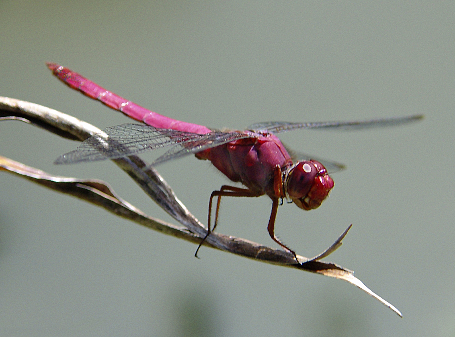 Dragonfly   Fact-Info ...