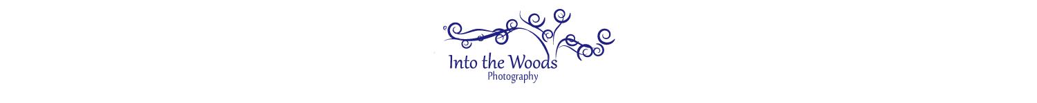 Into the Woods Photography