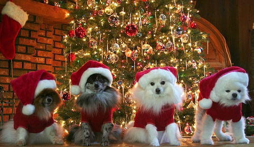 Merry Christmas Carols Songs Lyrics In Hindi front  | Christmas Songs In Hindi