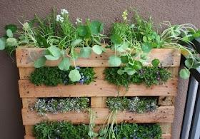 dekorasi halaman rumah: dekorasi laman herba di ruang balkoni