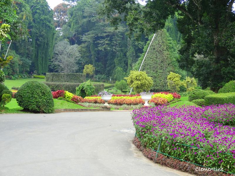 Le blog de clementine circuit au sri lanka novembre 2012 for Au jardin les amis singapore botanic gardens