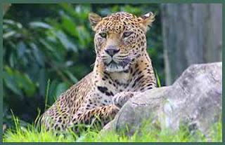 Sri Lanka's second zoo