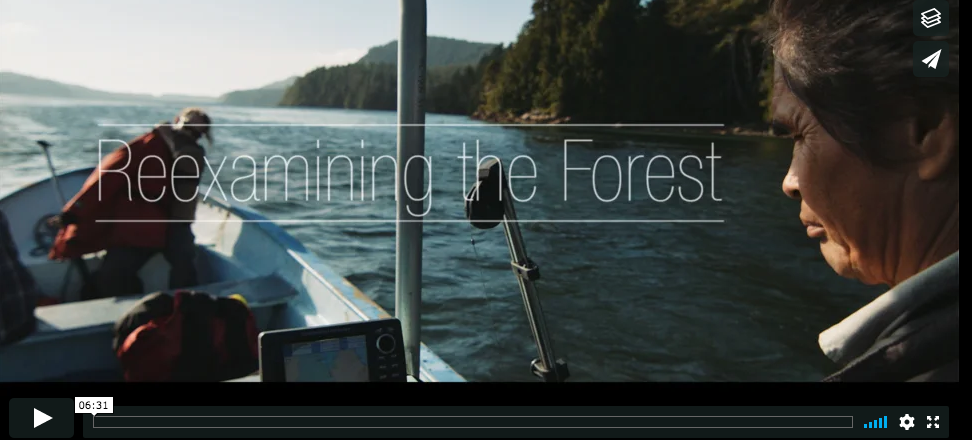 Popular Video: Reexamining the Forest