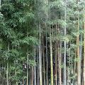 竹林,鳩森八幡神社,神明社,千駄ヶ谷〈著作権フリー無料画像〉Free Stock Photos