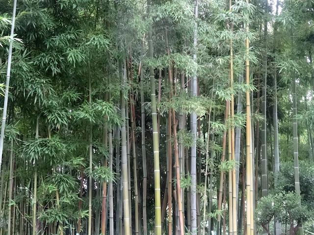 鳩森八幡神社,千駄ヶ谷〈著作権フリー無料画像〉Free Stock Photos
