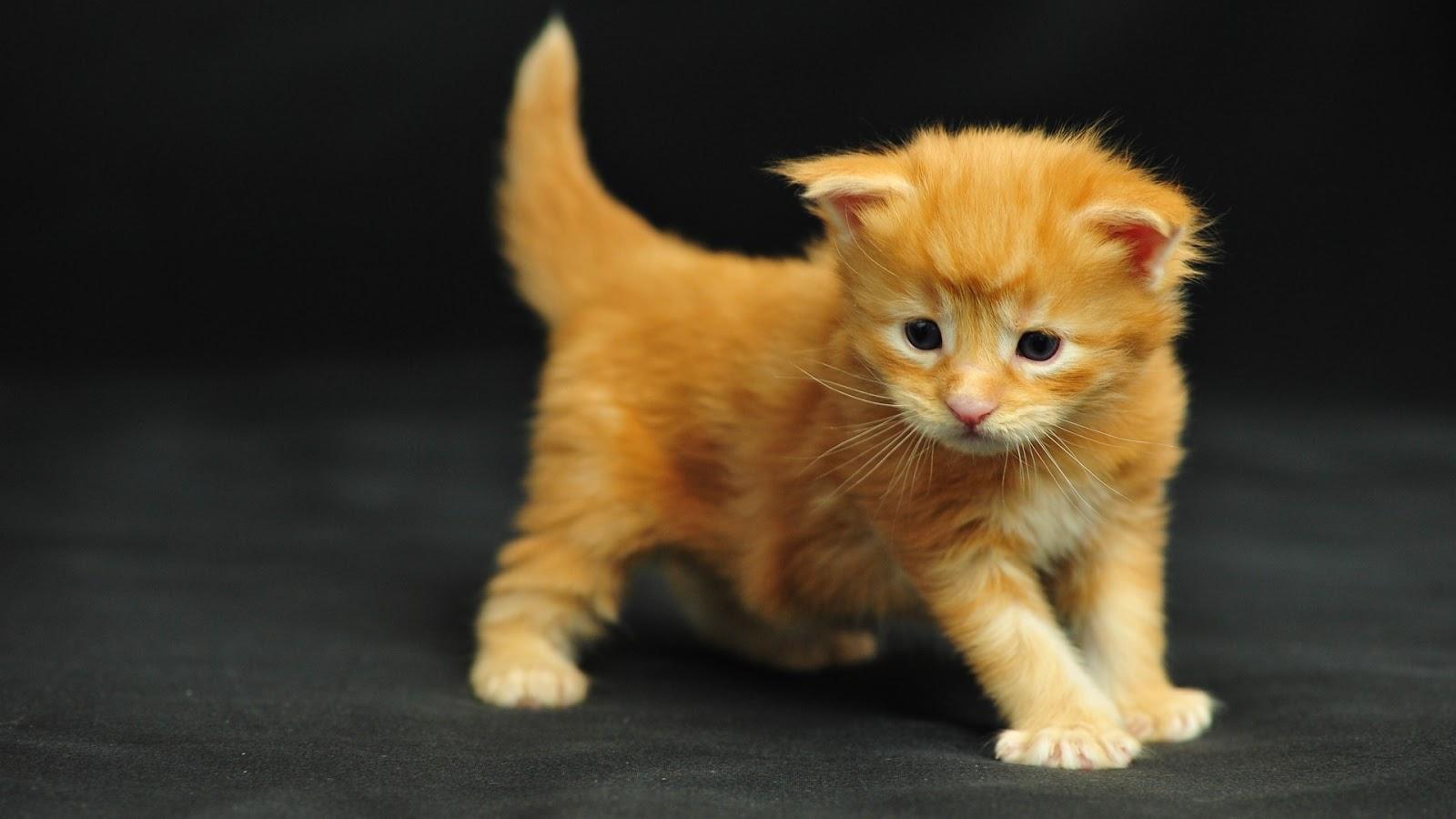 http://1.bp.blogspot.com/-tvqlxUdDN3k/UTjXdyu1RuI/AAAAAAAAACk/uQYdmyknbU8/s1600/image-wallpaper-1920-1080-Funny-Cat-Ocean-Maine-Coon-kitten-LOL-cats-Ni794894.jpg