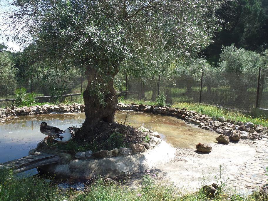 Novedades en la granja el estanque de los patos for Estanque para patos jardin