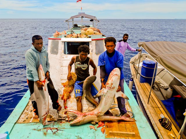 7 Kapal Penangkap Ikan Hiu Beroperasi di Raja Ampat