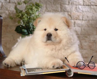 những hình ảnh chú cún dễ thương, những chú chó cute,