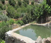 a pond in battir terraces